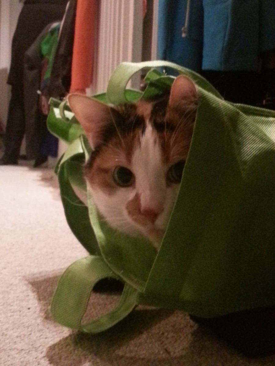 kitten in bag