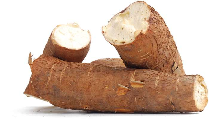cassava affected by climate change